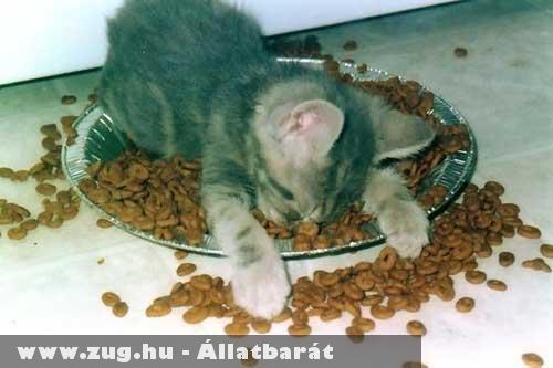 Elfáradt kiscica