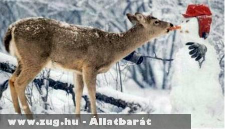 Éhes bambi