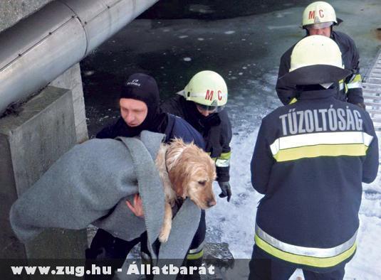 A biztos haláltól mentették meg a marcali tûzoltók azt a kutyust, amelyik alatt beszakadt a Balaton jege