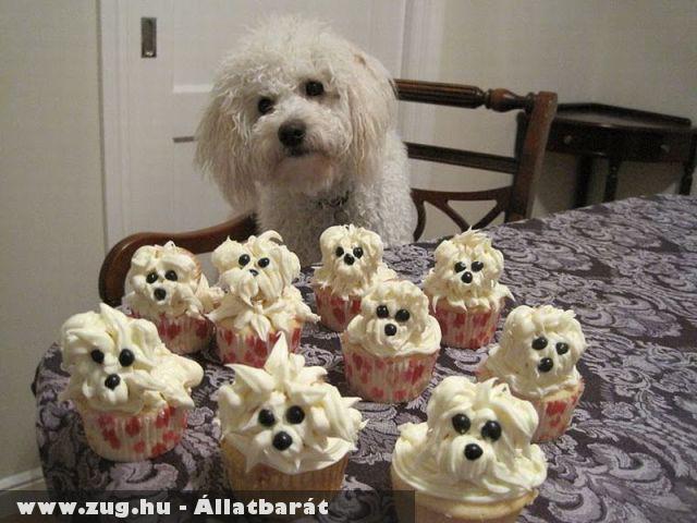 Kutya :d habos süti