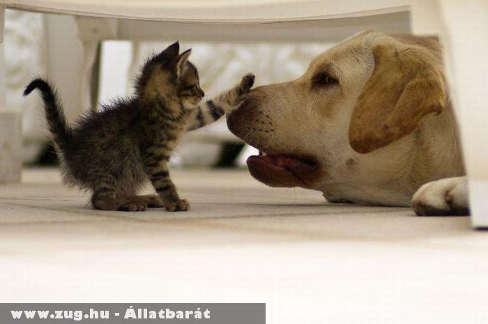 Kutya és cicus :)