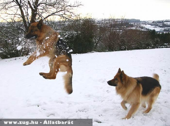 Kutya és a hógolyó