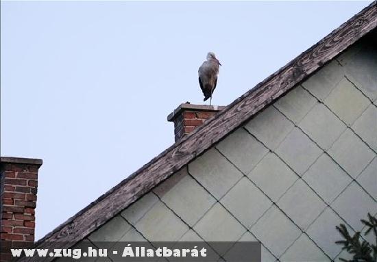 2012 elsõ gólyája megérkezett