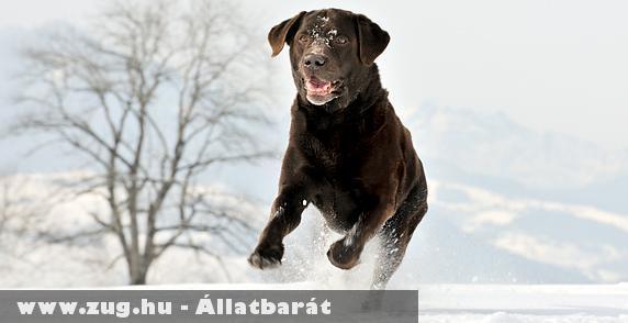 Kutya a hóban