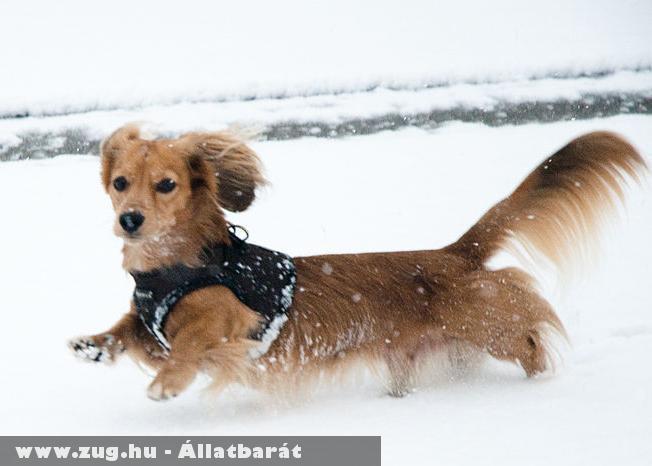 Futás a hóban