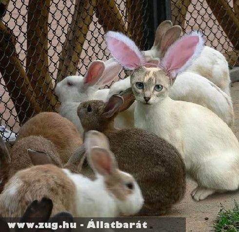 Húsvéti Cica