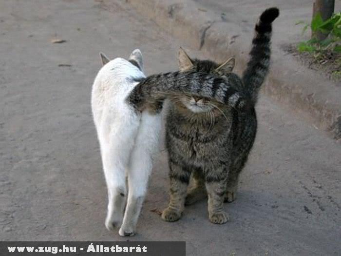 Bagzódó macskák - nem látok, tüzelek!