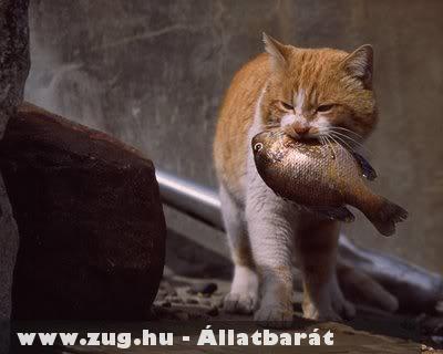 Vöri cica és a halacska