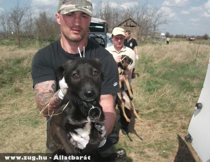 Kutyamentés - Székkutas 2012