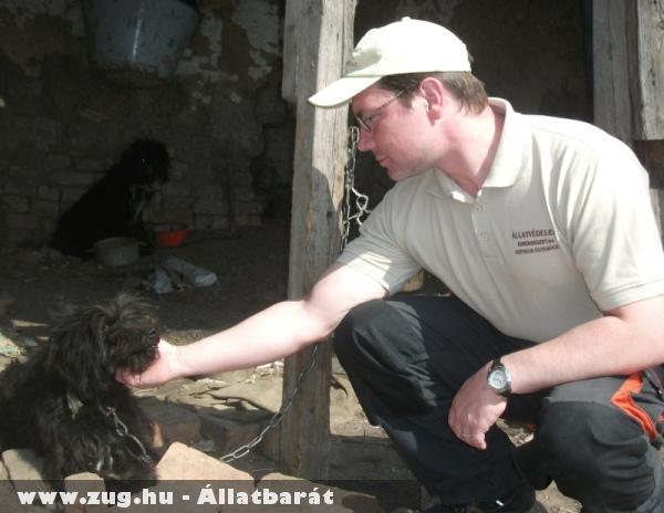 Segítünk - kutyamentés