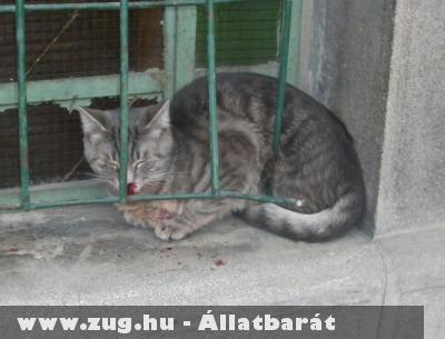 Ablakból esett cicát sikerült megmenteie az Orpheus Állatvédõ Egyesületnek