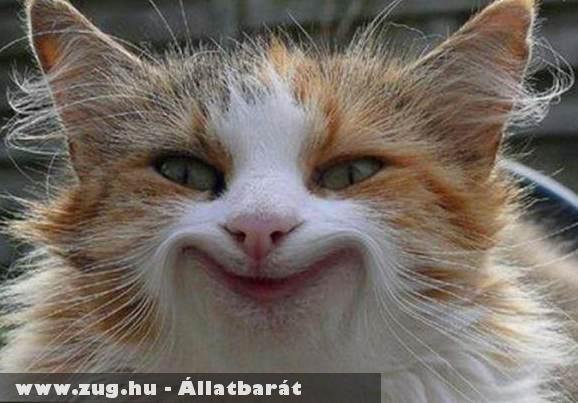 Happy Cat :)