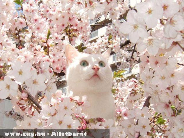 Tavaszi cicuska