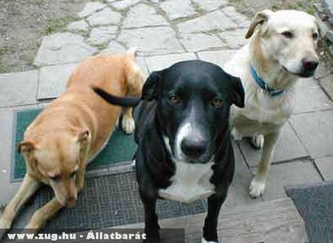 Kutyusok az ajtóban :D