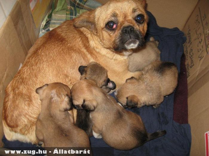 Ezt a kutyacsaládot egyszerûen kidobták (anyástól, kiskutyástól)