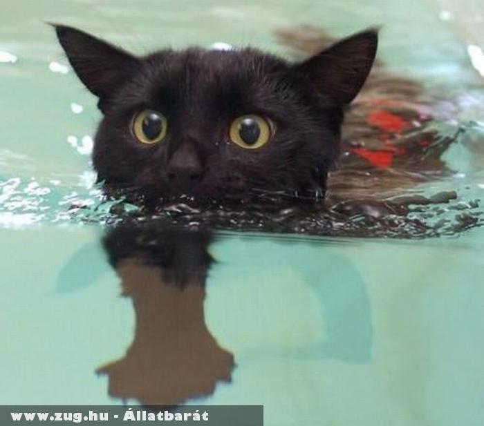 Cica úszás