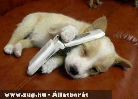Telefonáló kutyus :)