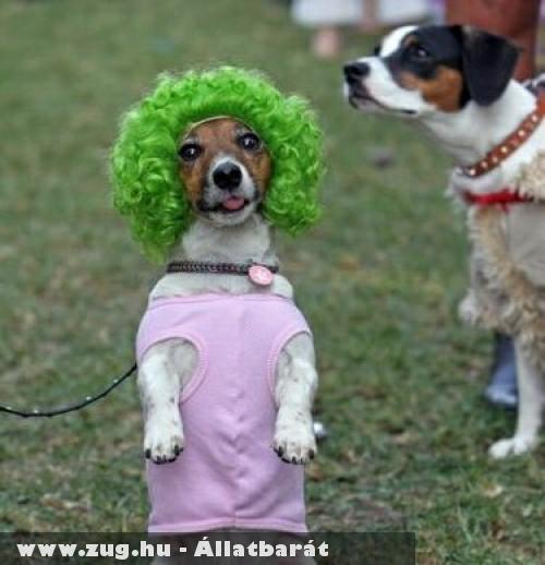 Kutya divat