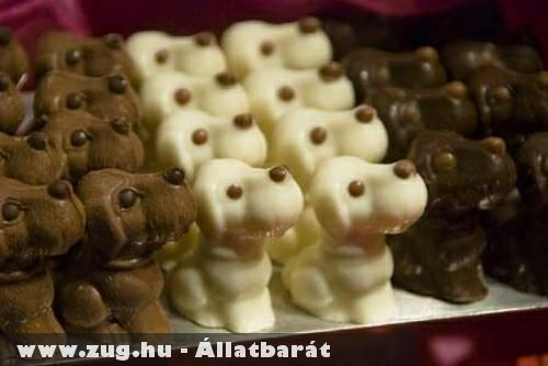 Kutyus formájú csoki
