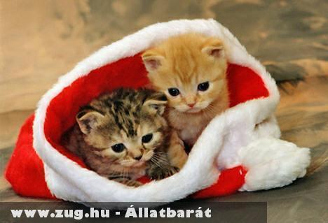 Mikulás cicák