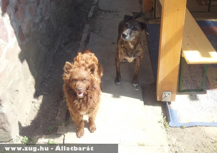 Tigris és Manka kutyák is a nap ellen az árnyékot keresik :D