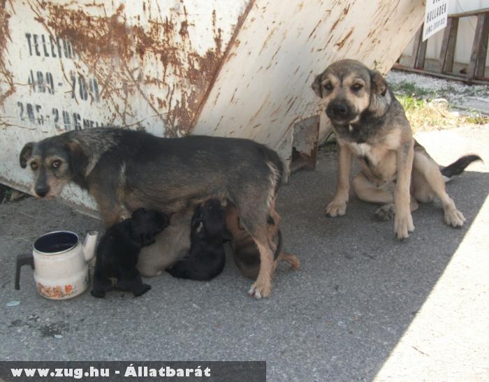 Kiskutyák és az anyjuk - Orpheus védencek