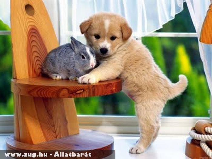 Barátkozás