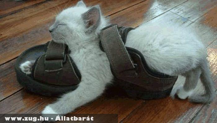 Kényelmes alvóhely