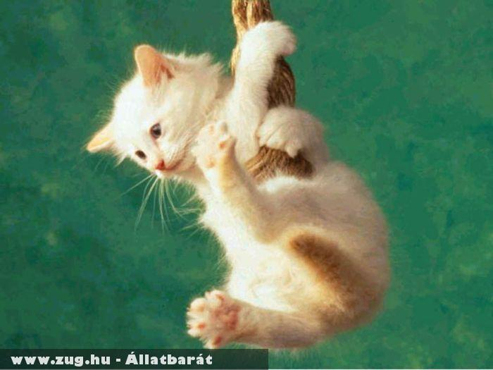 Kapaszkodó cica