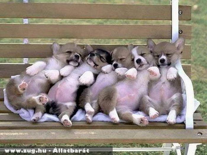 Kiskutyák a padon