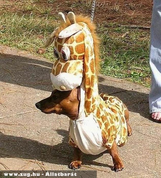 Zsiráfnak öltözött kutyus