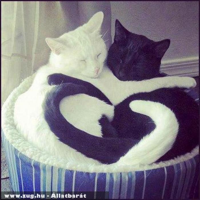 Fekete-fehér cicusok