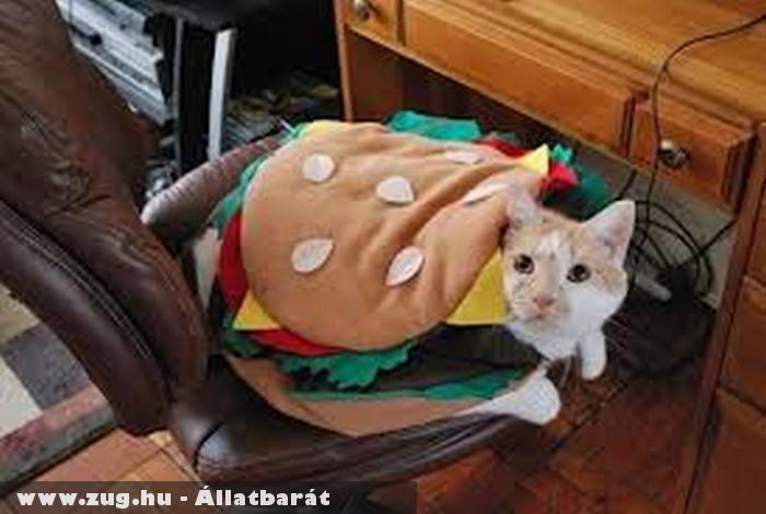 Hamburgerpárnákba ágyazott cica