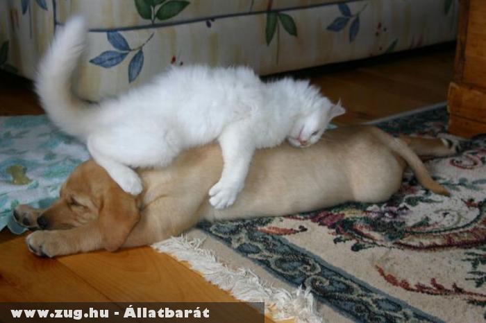A cica párnája egy kutya