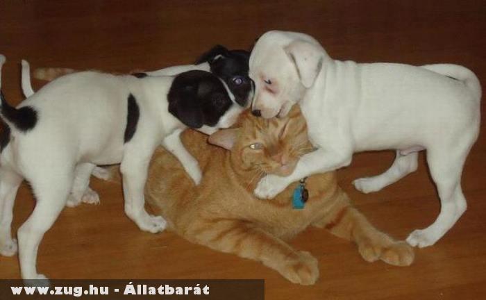 Játék a cicával