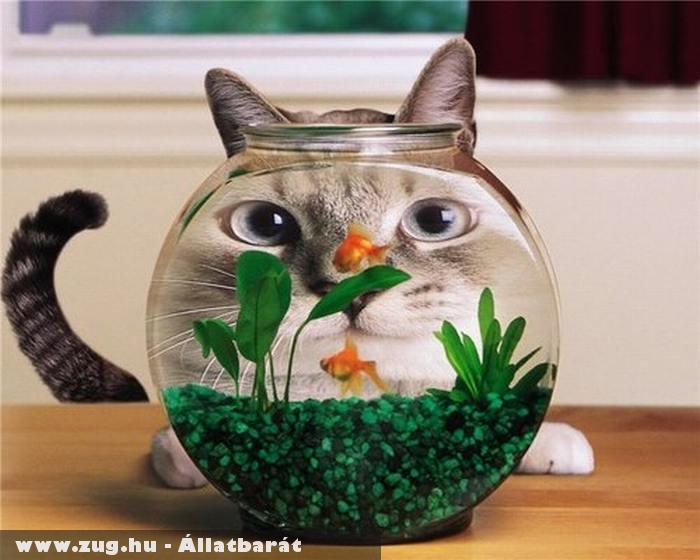 Cica és az akvárium
