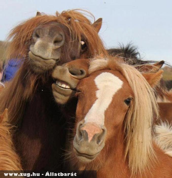 Fotózkodó lovak