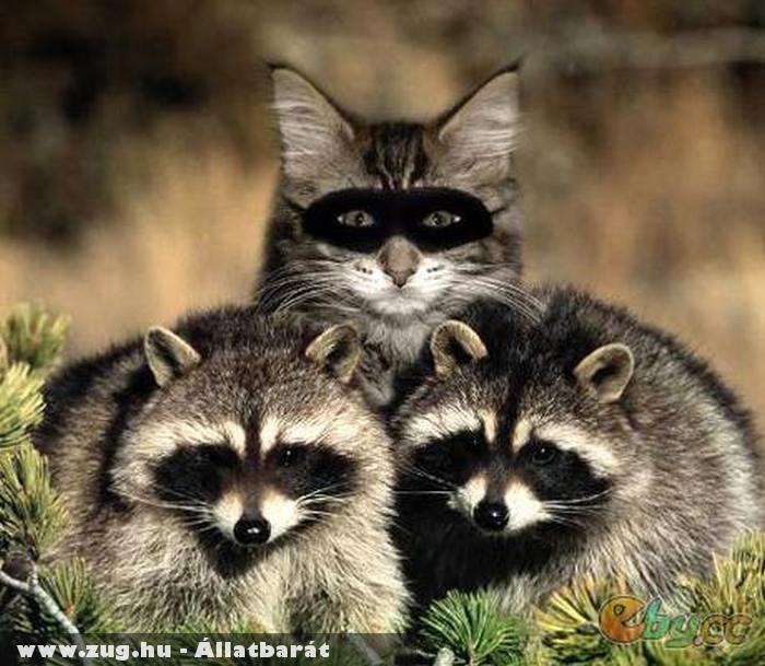 Mosómedvék közé beépült macska