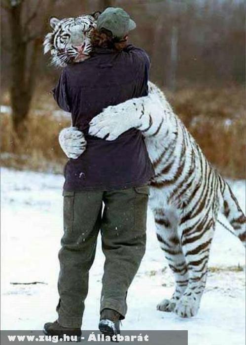 Tigrisölelés