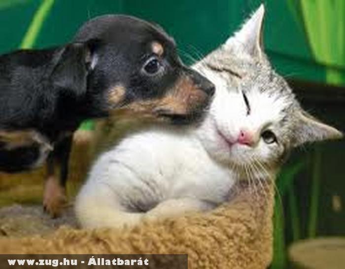 Macska-kutya barátság