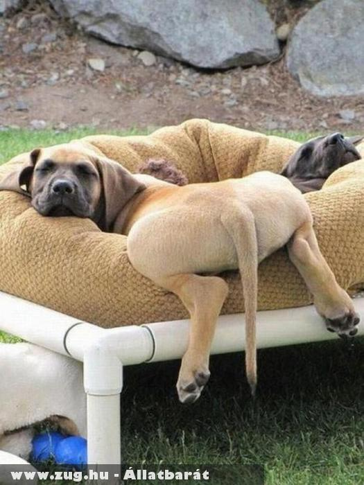 Különös alvási póz