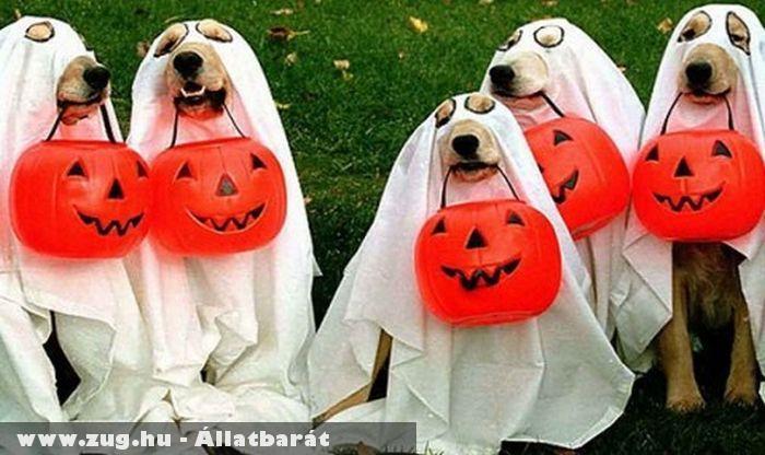 Halloweeni kutyusok