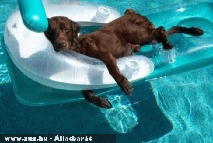 Strandoló kutyus