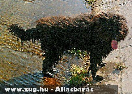 Buksi áll :)