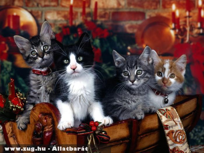 Ünneplõ macskák