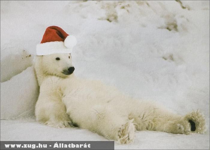 Fáradt jegesmedve