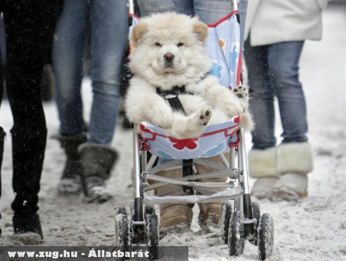 Luxus a kutyusnak