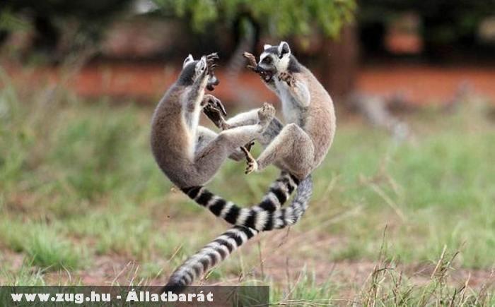 Maki tánc