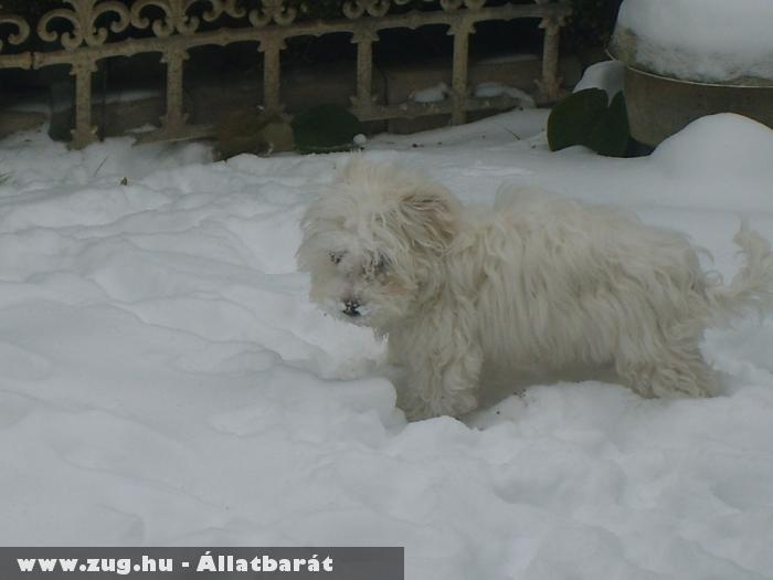 Zizi élvezi a havat