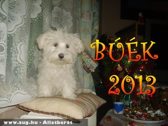 Zizi Boldog Új Évet kíván minden állatbarátnak!